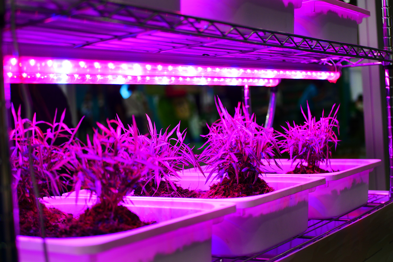 Right Grow Light for weed
