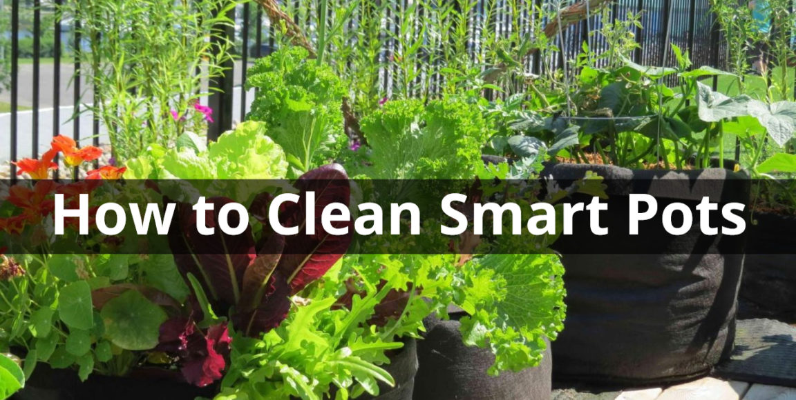 How to Clean Smart Pots