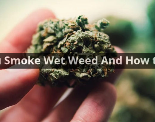 Can You Smoke Wet Weed And How to Dry It