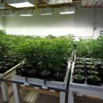 Flowering Light Cycle Interrupted- Here's How to Solve It