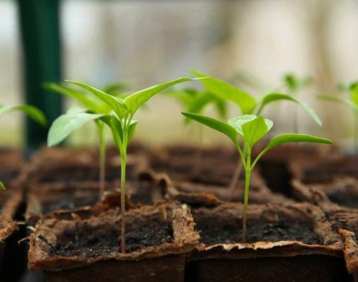 12 Ways on Raising Humidity in Grow Tent